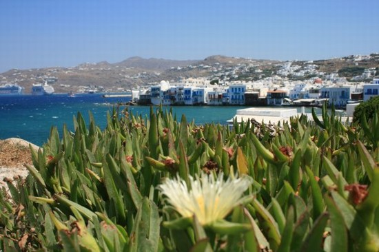Photo Splendidi colori di Mikonos in Mykonos - Pictures and Images of Mykonos