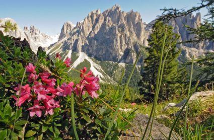 Photo vigo di fassa il giardino delle rose photos de vigo di fassa et images 425x278 auteur - Il giardino delle rose ...
