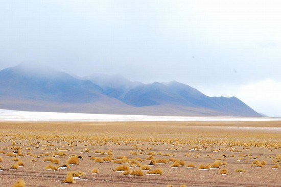 Photo L'inizio del deserto di sale in La Paz - Pictures and Images of La Paz