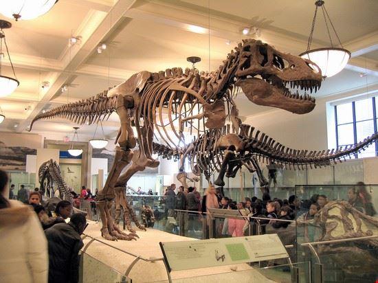51745 new york dinosauri al museo