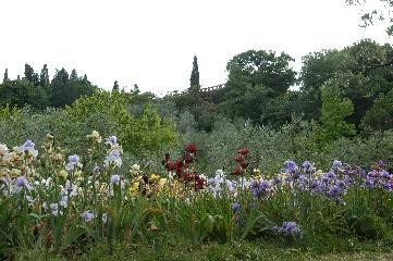 Giardino dell 39 iris parchi e giardini a firenze - Giardino dell iris firenze ...