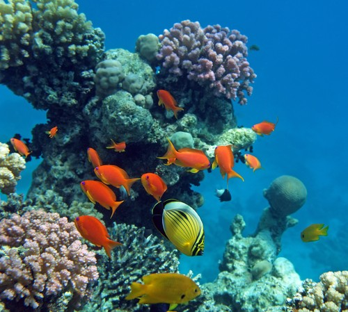Photo Snorkeling nel Mar Rosso, Sharm el Sheikh in Sharm El Sheikh - Pictures and Images of Sharm El Sheikh