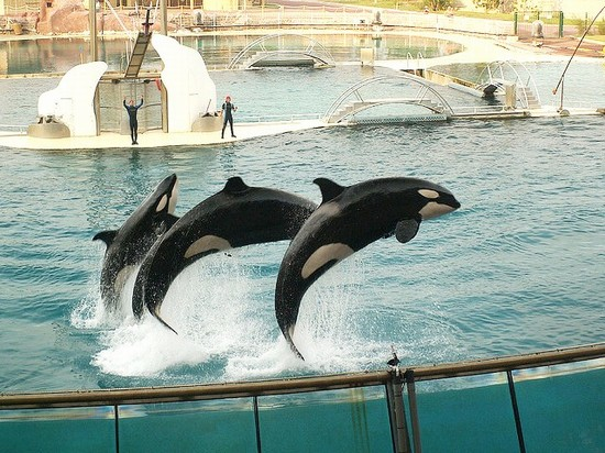 Photo nizza marineland di antibes in nice pictures and images of nice 550x412 author - Point p antibes ...