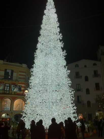 Photo albero bianco salerno in Salerno - Pictures and Images of Salerno 