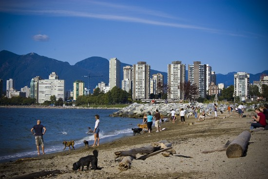 Photo vancouver kits beach la spiaggia di kitsilano in Vancouver - Pictures and Images of Vancouver - 550x367  - Author: Editorial Staff, photo 1 of 143