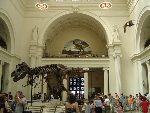 FIELD MUSEUM OF NATURAL HISTORY a CHICAGO