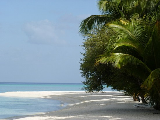 Photo Palme in Ari Atoll - Pictures and Images of Ari Atoll