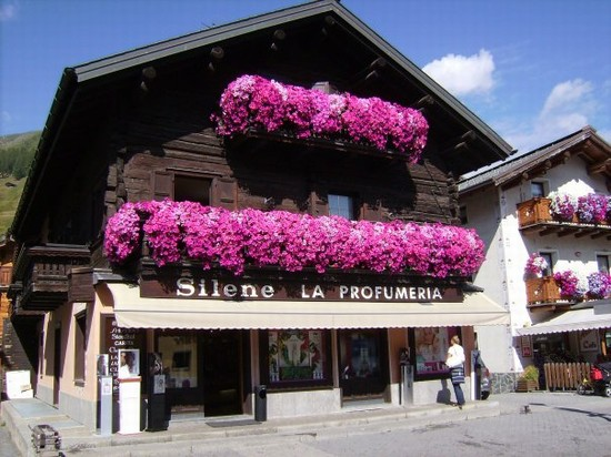 Photo fiori livigno in Livigno - Pictures and Images of Livigno 