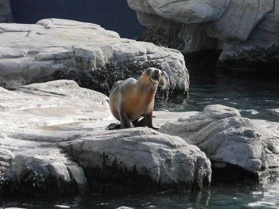 Foto museo oceanografico a valencia 550x412 autore for Oceanografico valencia