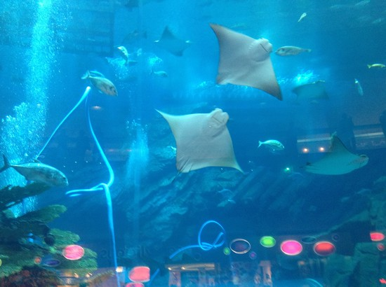 Photo acquario nel dubai mall dubai in dubai pictures for Acquario shop online