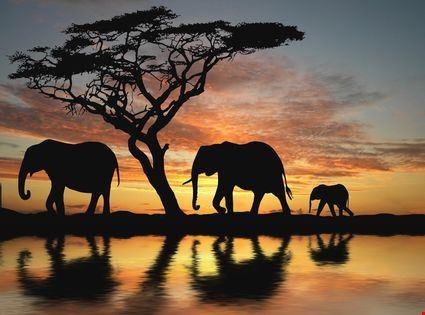 Gruppo di elefanti al tramonto
