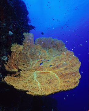 Vita sottomarina