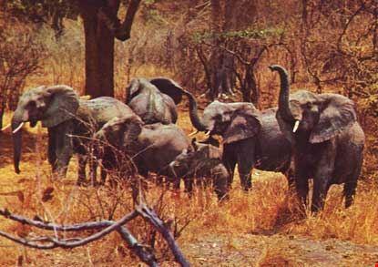 Luangwa: il migliore parco nazionale in Zambia