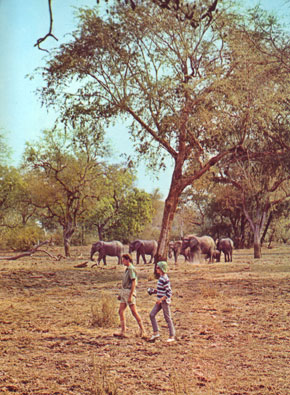 Photo lusaka parco nazionale del south luangwa in Lusaka - Pictures and Images of Lusaka - 290x395  - Author: Editorial Staff, photo 4 of 15