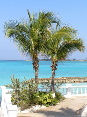 Photo Palme Tropicali in Nassau - Pictures and Images of Nassau