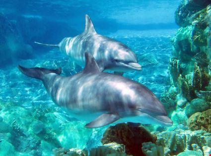 Delfini al giardino zoologico