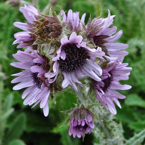Photo jardin des plantes in montpellier pictures and for Jardin des plantes de montpellier