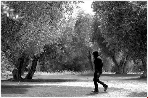 museo dell olivo