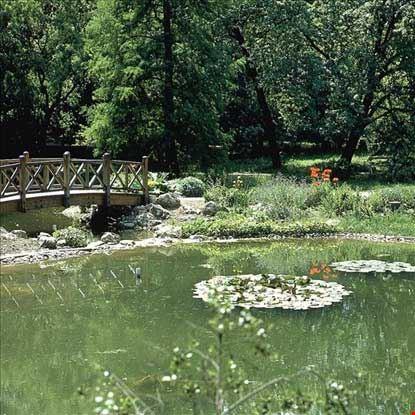 Veduta parziale del laghetto botanico