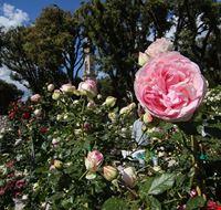 flower-show-peonie.jpg
