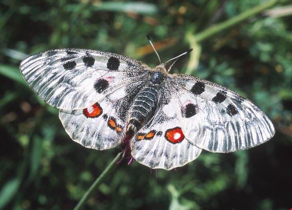 butterfly_safari