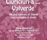 ciuriciuri_a_valverde