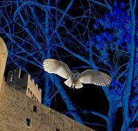 rocca_di_staggia_nella_foresta_labirinto