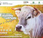 wwwmadonnadellacampagnaseregnocom
