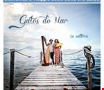 gatos_do_mar