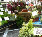 Forni-Festa-delle-erbe-Selli-Coradazzi-04.jpg