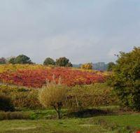 i colori d autunno sinalunga