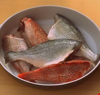lissone pesce fresco
