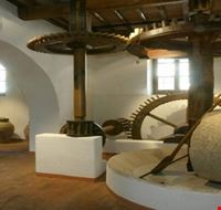 Museo dell'olivo Torgiano