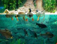 shanghai acquario