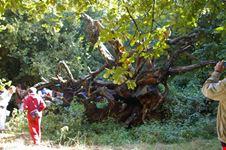 bosco del cerquone