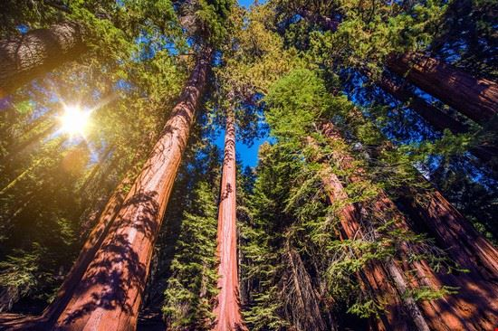 sequoia national park sequoia national park