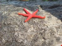 stelle non solo in cielo isola di pantelleria
