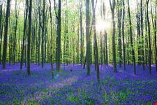 bruxelles foresta di halle