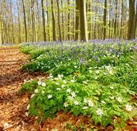 104074 bruxelles foresta blu