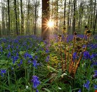 104075 bruxelles foresta blu