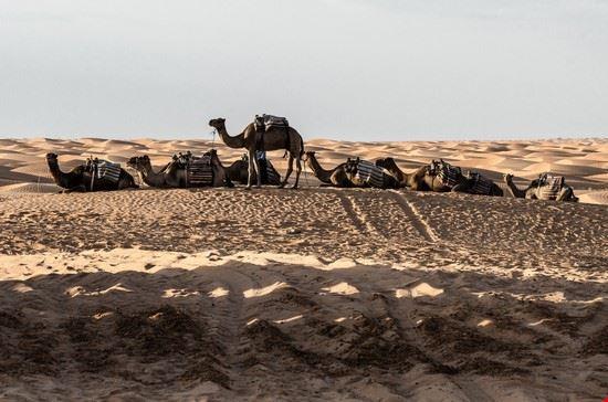 tunisi deserto