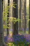 bruxelles foresta blu