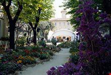 cattolica cattolica in fiore
