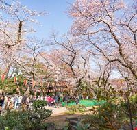 104988 tokyo parco di ueno