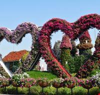 105597 dubai miracle garden