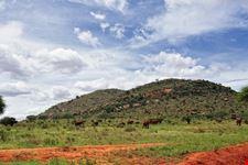 malindi parco nazionale tsavo est