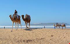 essaouira cammelli