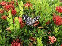 koh samui giardino delle farfalle