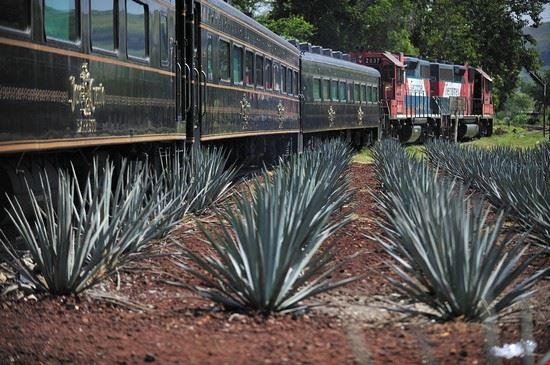 guadalajara tequila express