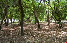 parco delle dune natal - bosco